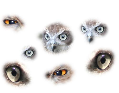 Eyes by Matthew_Leyshon