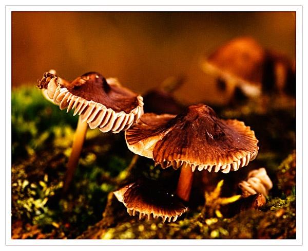 fungi by sawdust