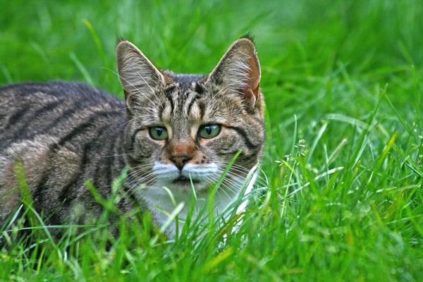 cat by nigell