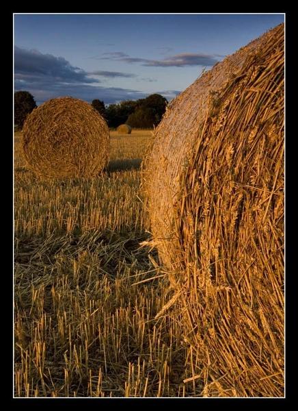 Sunset Straw by Boagman65