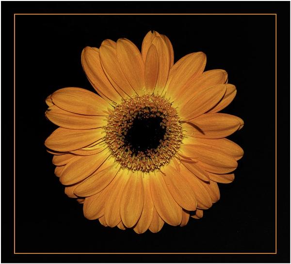 Orange (ish) by Ian Hunter