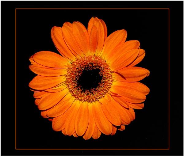 Orange (corrected) by Ian Hunter