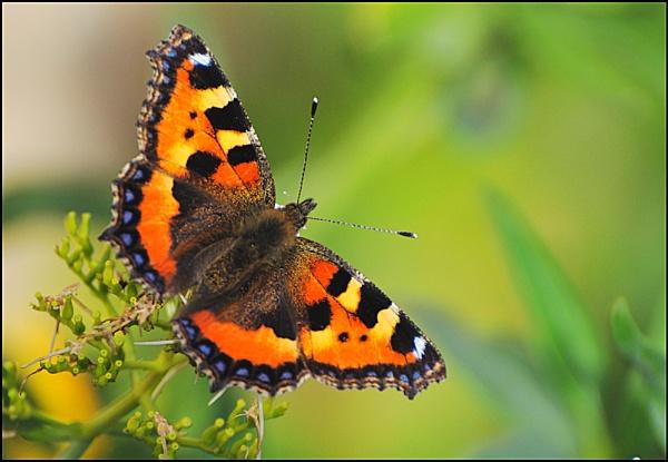 Butterfly by Ian Hunter