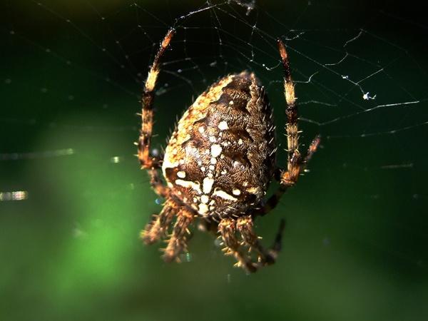 Incy Wincy Spider ... by Traceyflowerpots