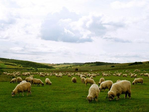 Sheep farm by efraimgal