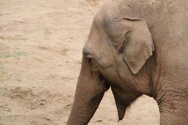 Elephant by jcf