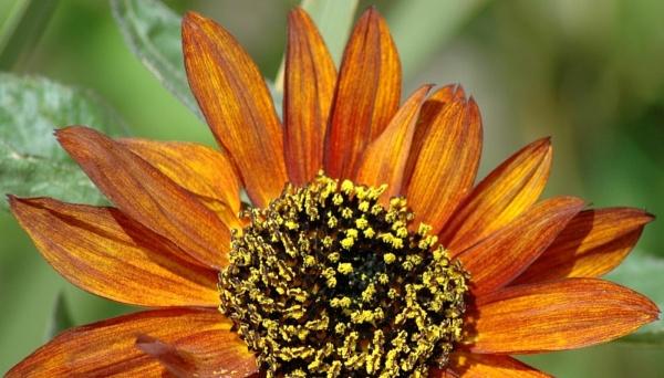 Sunnyflower by Birdseye