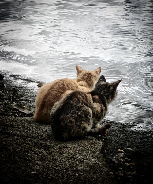 Mauritian Cats by BubbaG2000