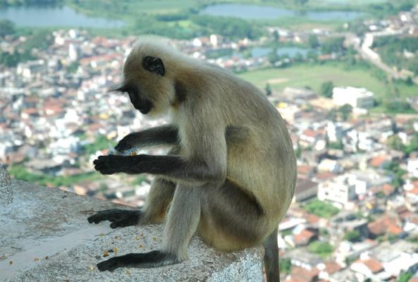 monkey by sunayana