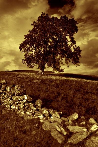 Lone Tree by wheresjp