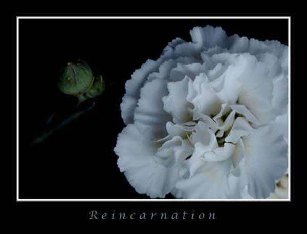 Reincarnation by RAYMO