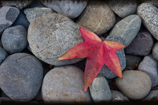 autumn  begins by xenonhornet
