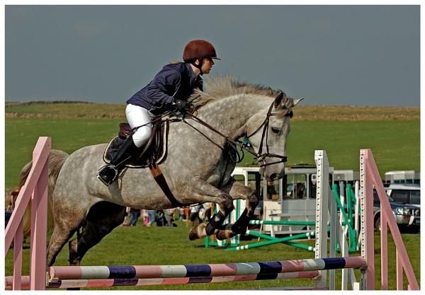 horse jump by ducatifogarty