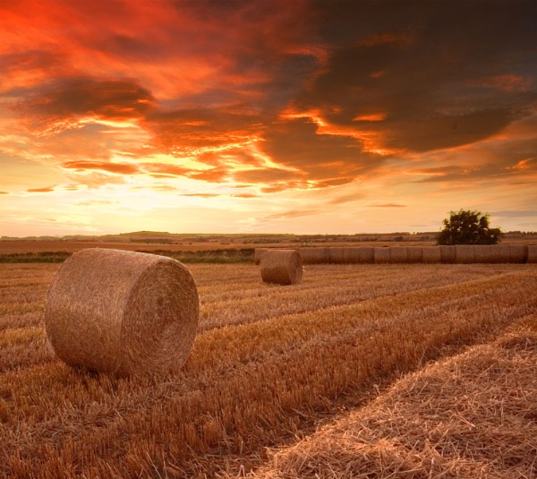 Harvest Sunset by Yewtree