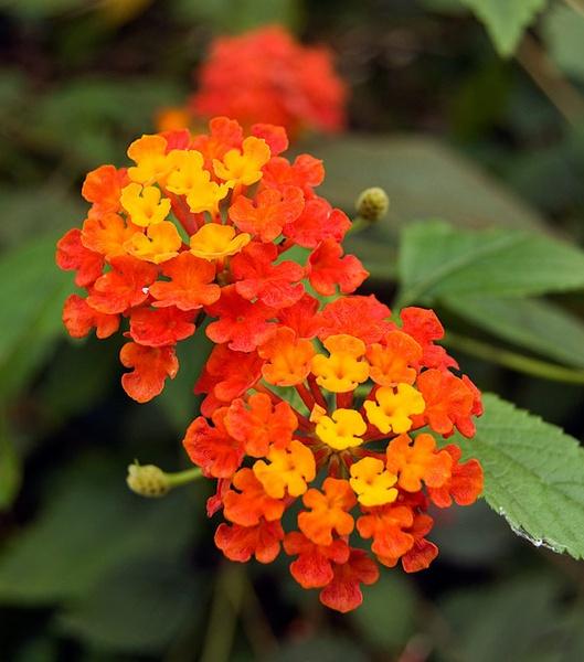 pretty flower by geosami
