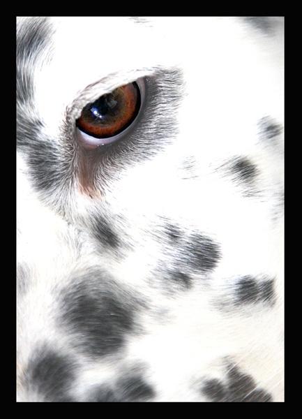 Lucy\'s Eye by Mstphoto
