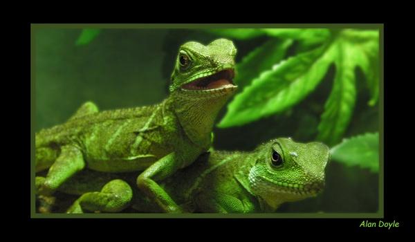 Jurassic Petshop II by Alan86