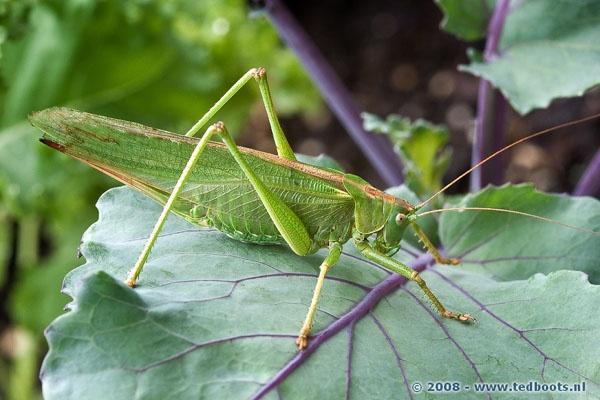 grasshopper by tebo