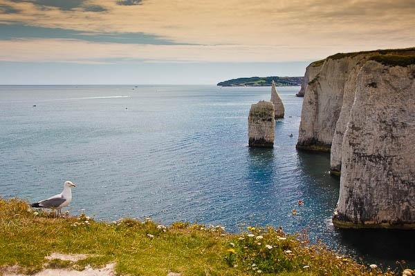 The Pinnacles, Dorset by daweska