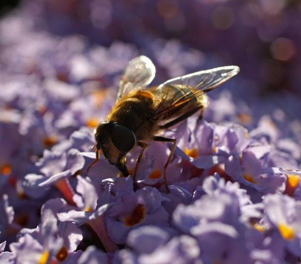 Wasp by helengib