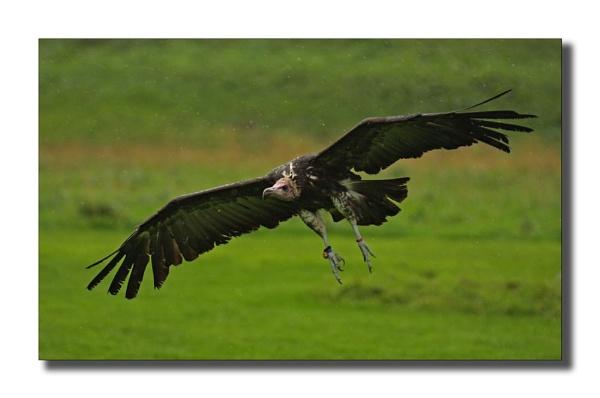In Flight by Philip_P