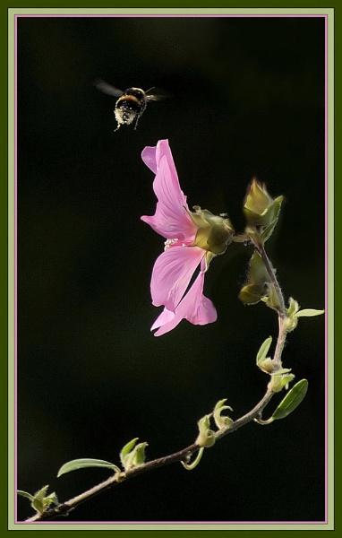 laverteria by dden