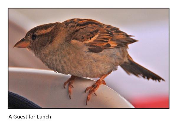 Lunch Guest by ferguspatterson