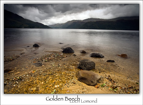 Golden Beech by Landlord