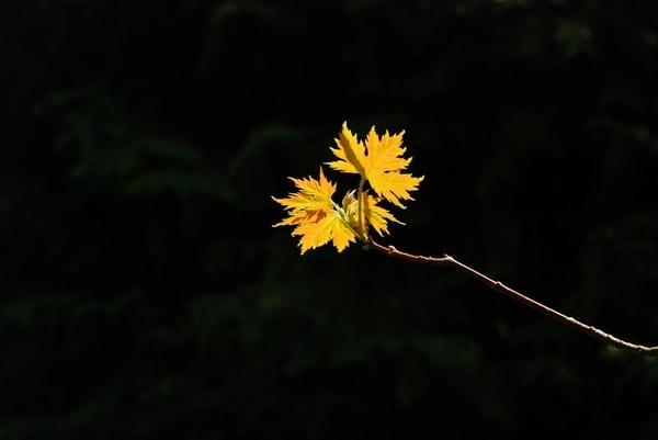 Autumn! by olesya