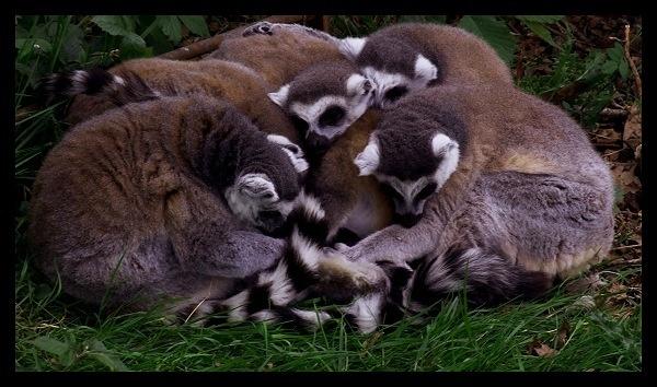 Group Hug by AliMurray