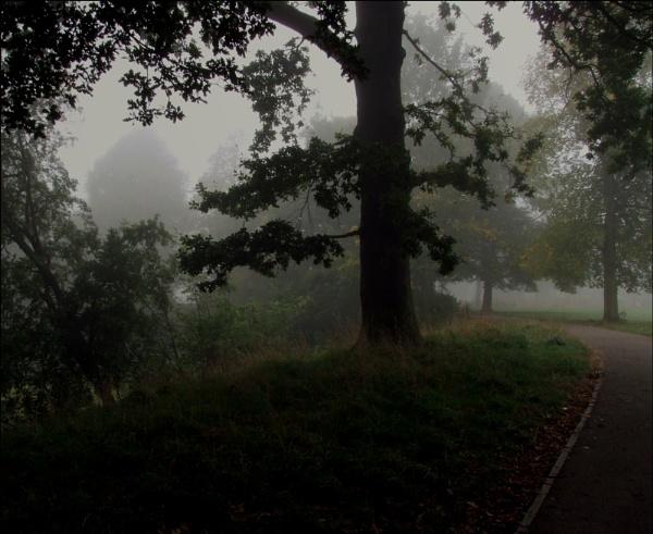 Misty morning by helenlinda