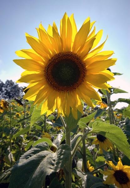 Sunny disposition by Birdseye
