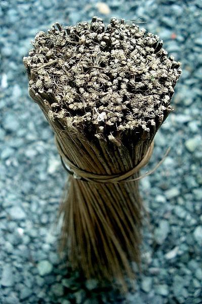 Native Broom by photophantom