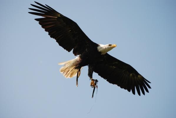 Big Bird by ANDZOOP