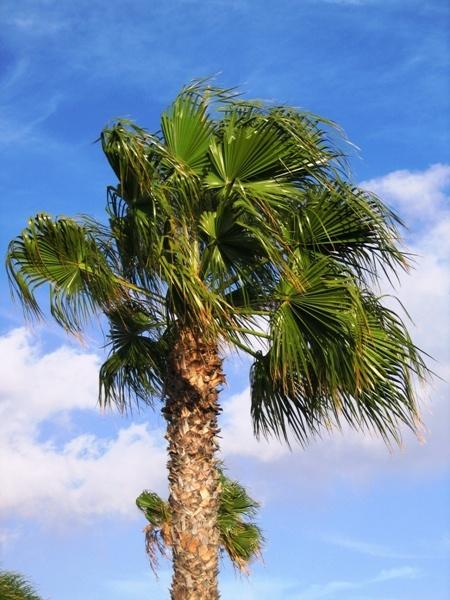Palm Tree by Heatherj