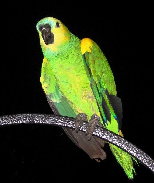 Pretty Polly by Heatherj