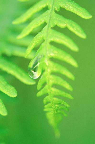 Dew Drop by Nigeyboy