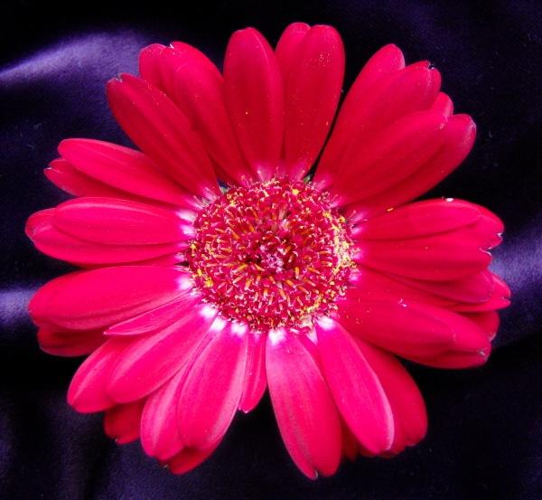 Power Flower! by LindaSJ
