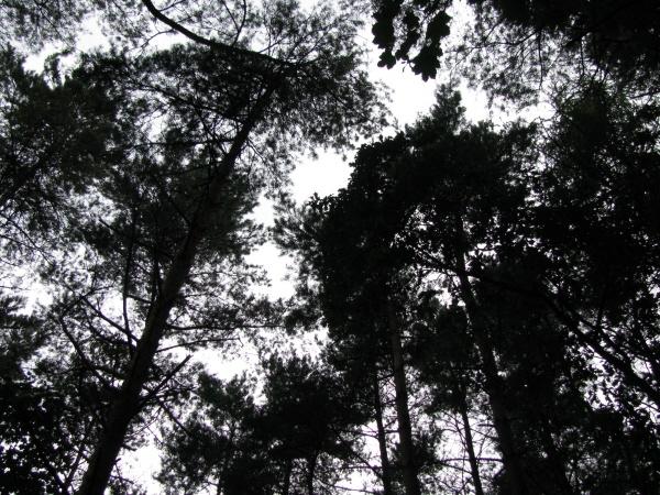 Soft light through trees by LindaSJ
