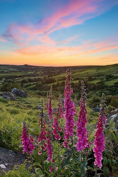 Devon Wildflowers by alexnail