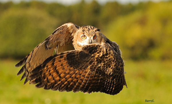 Eagle Owl Take Off! by smitbar