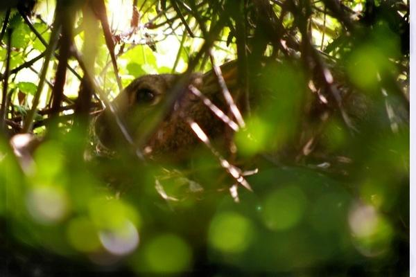 deep in the hedgerow by Mynett
