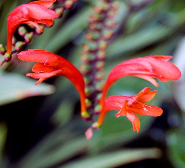 red flower by geosami