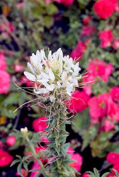 white flower by geosami