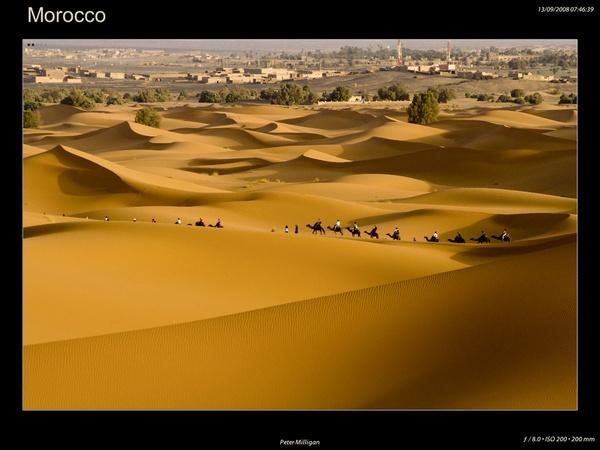 Modern Camel Train by pm23