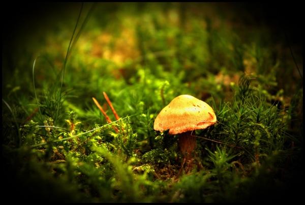 Treasures in the woods by cnorris