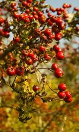 Lichen to Berry
