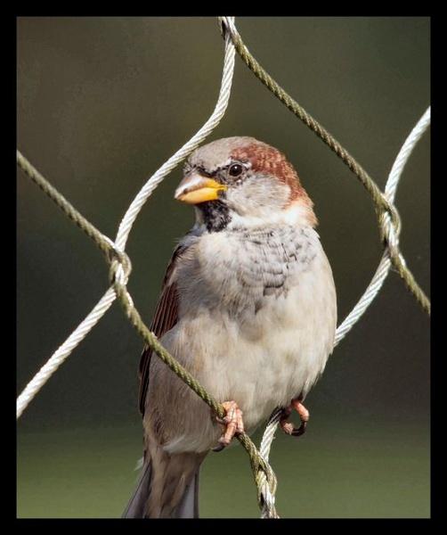 Birdie by iancam