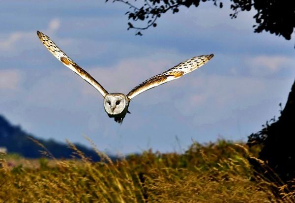Flight of the owl by samoyed