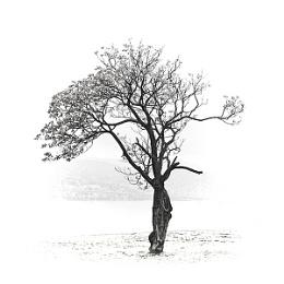 The Tree of Memories